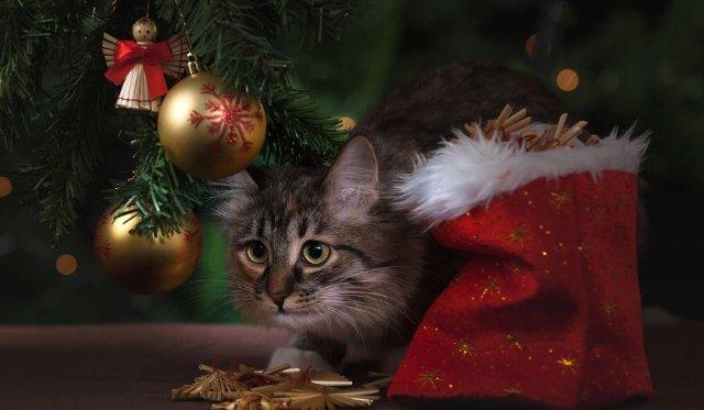 Новогодние праздники окончены, подводим итоги новогодним каникулам