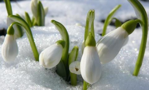 Картинки для одноклассников с днем весны